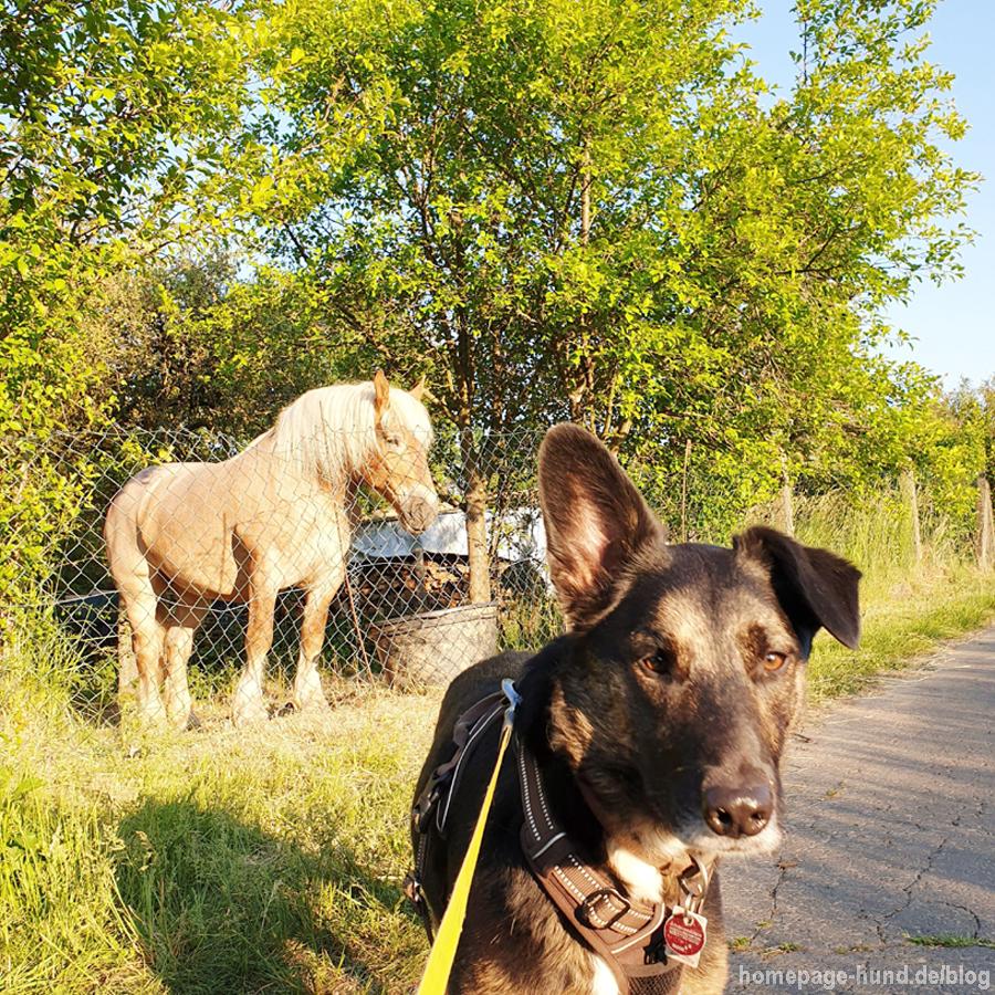Nachbarspferd