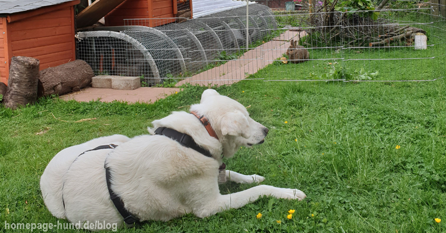 Hundeblog Garten Kalli