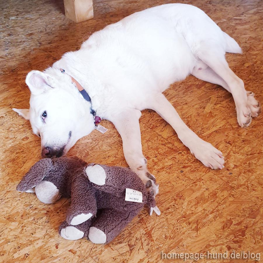 Kalli Hundespielzeug
