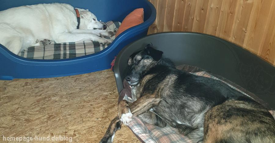 Kalli und Dorchen im Hundekorb
