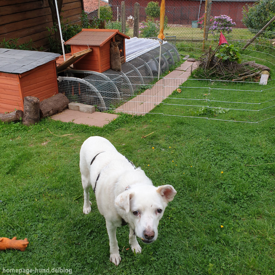Pauli Garten Hundeblog