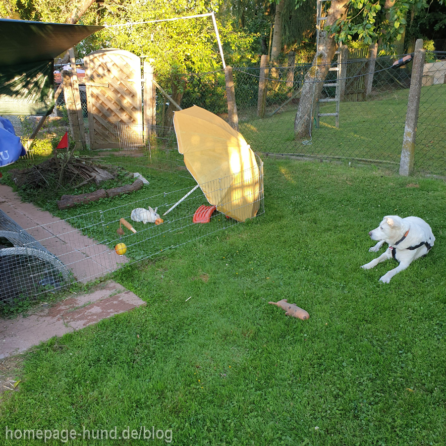 Kaninchen und Hunde im Garten