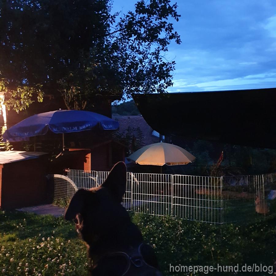 Kaninchen und Hund im Garten
