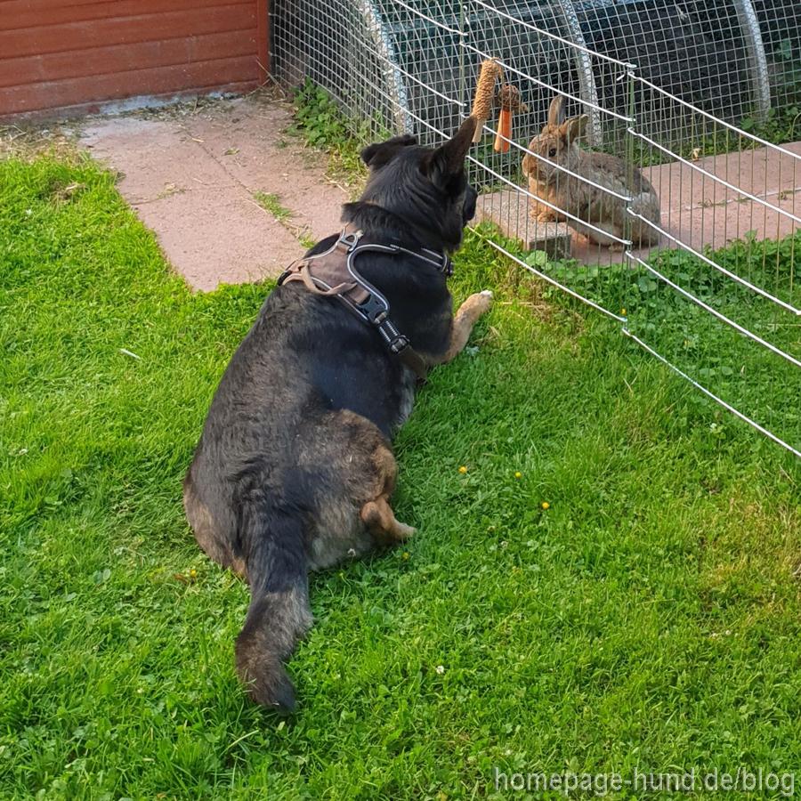Beste Freunde - Hund Dorchen und Kaninchen Pauli
