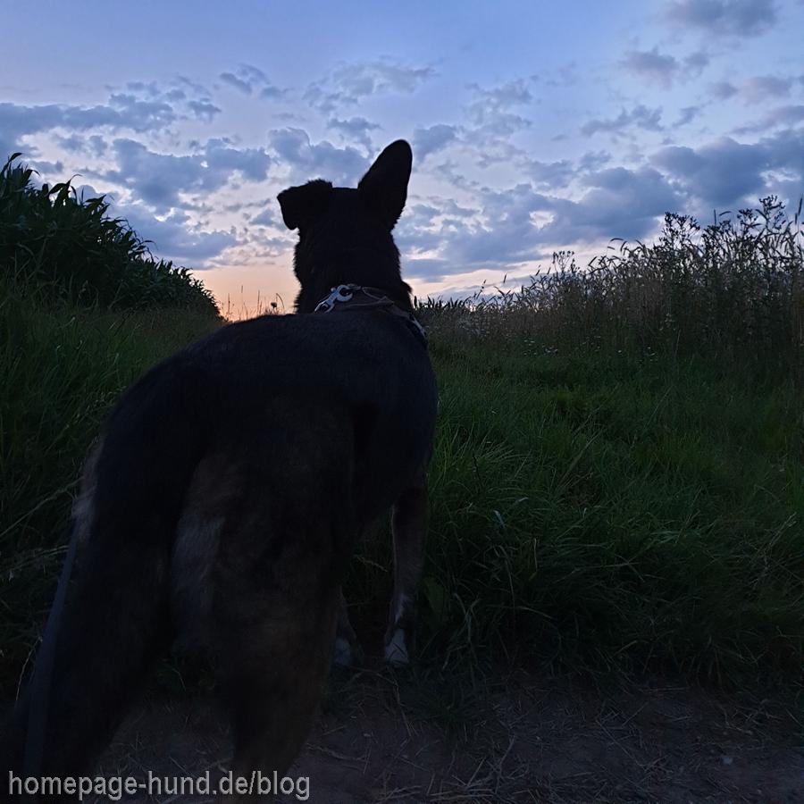 Hund Sommerhitze