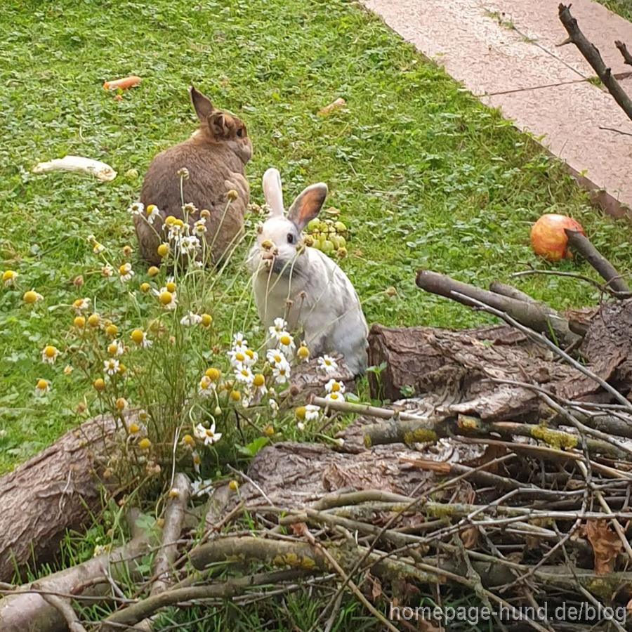 Kaninchen Garten
