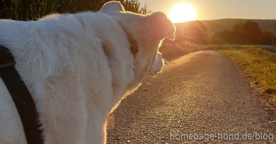 Kalli Hund im Sonnenaufgang im Wohratal