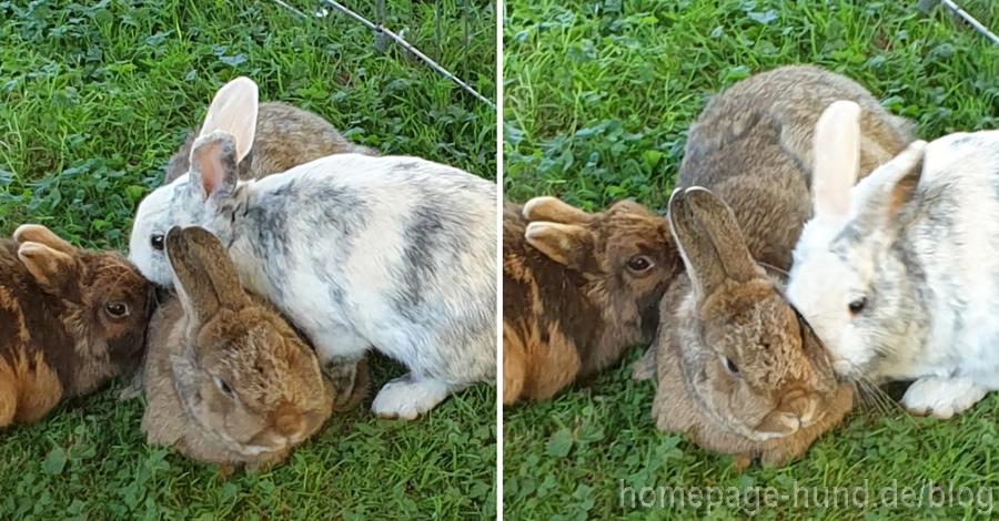 Kaninchen Zoff