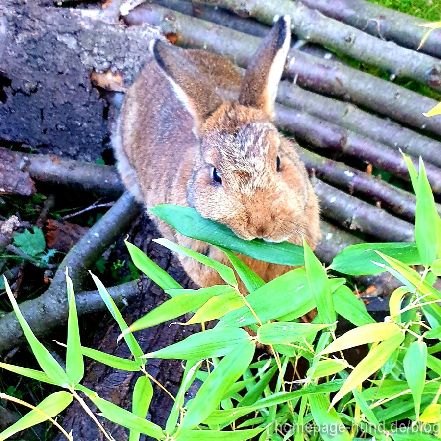 Kaninchen Bambus
