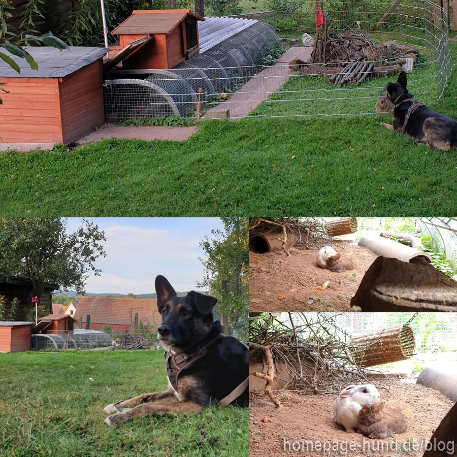 Kaninchen Hunde Security