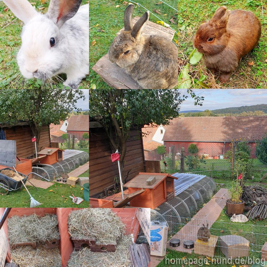 Reinigung Kaninchengehege