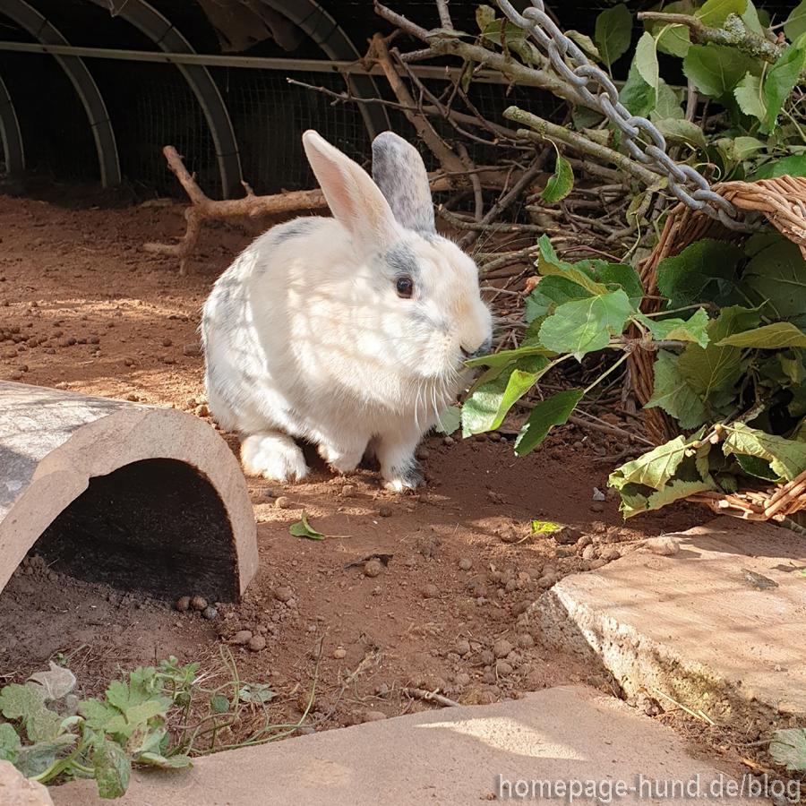 Kaninchen im Gehege