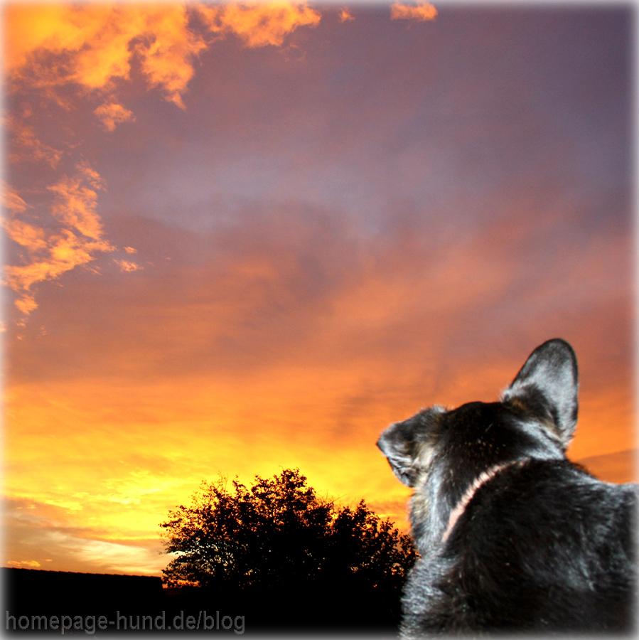 Sonnenaufgang Wohratal Wohra Hessen Hundeblog