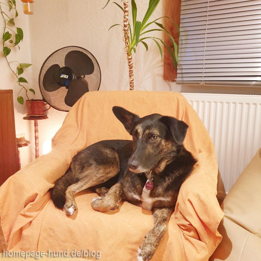 Hund und Staubsauger - Dorchen macht das Staubsaugergesicht