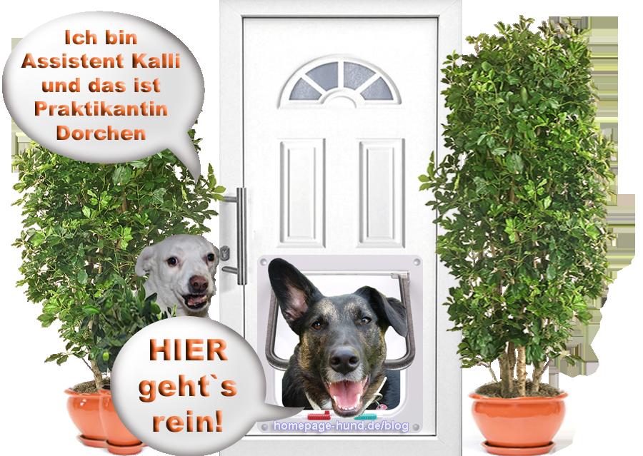Hundeblog rund um den Hund - Tierschutzhunde Kalli und Dorchen