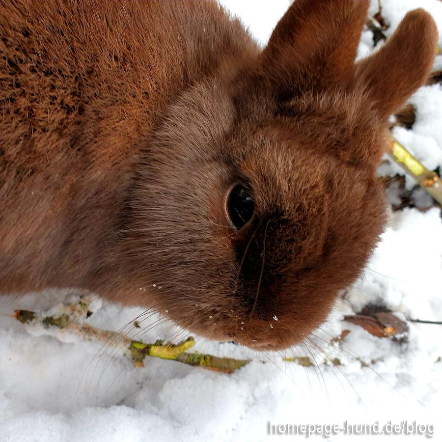 Kaninchen Emilia