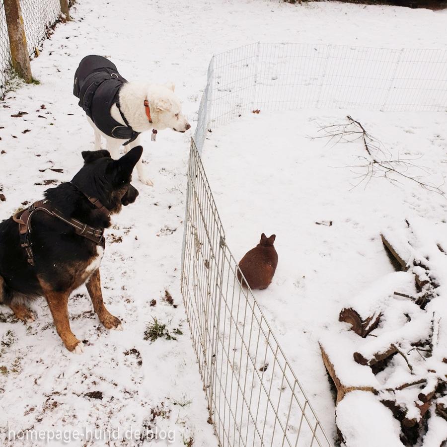 Emilia wird von der Hunde-Security bewacht