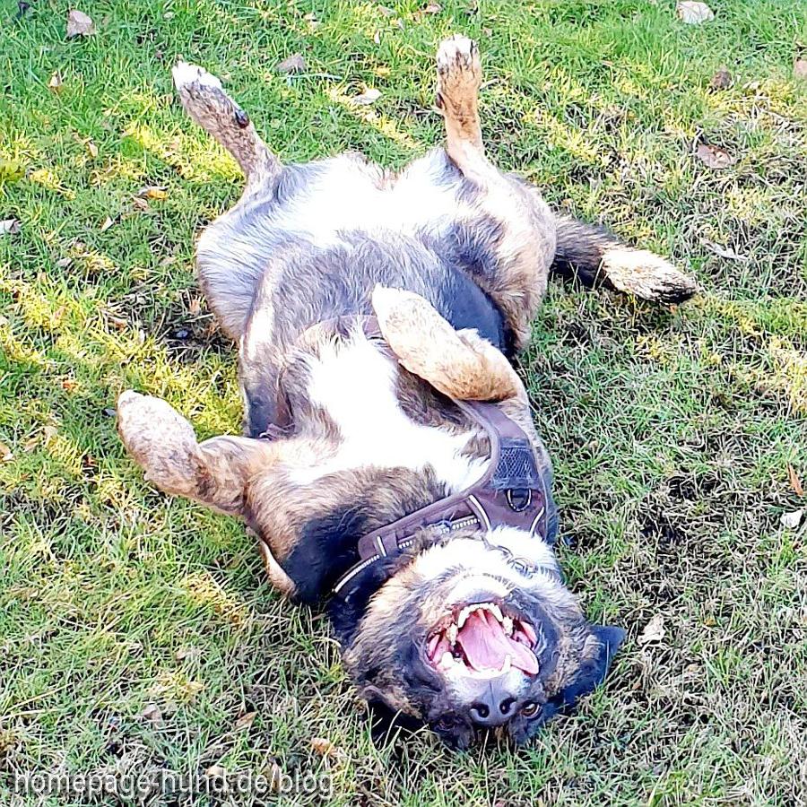 Dorchen Hund genießt die Sonne