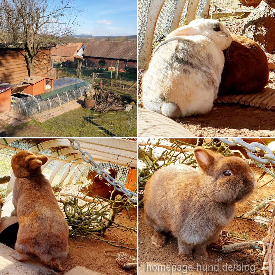 Die Kaninchen sonnen sich