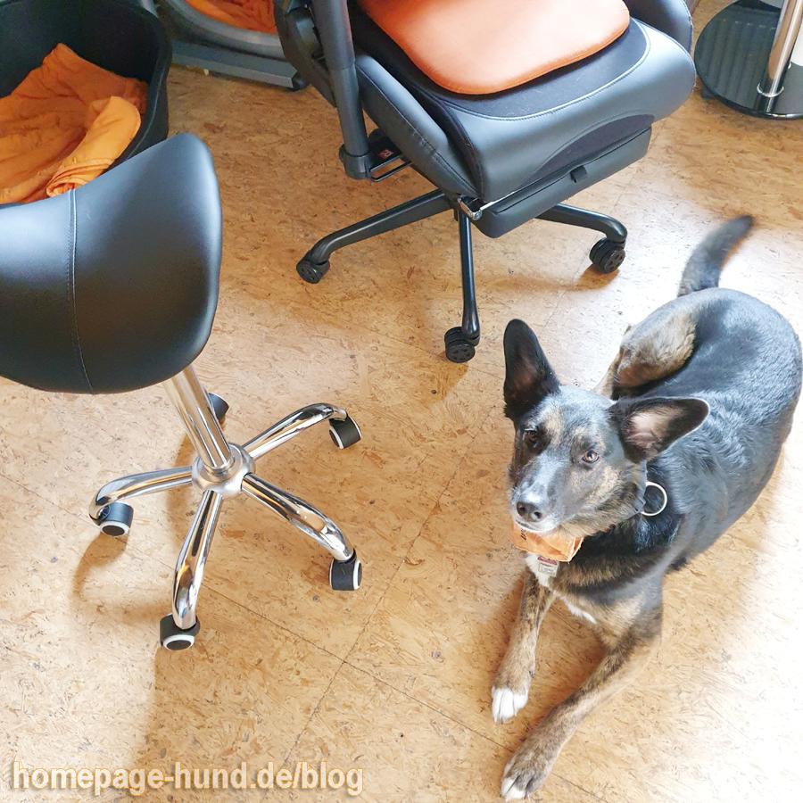 Wir sind ja Bürohunde und Kalli schimpft sich Assistent und ich bin erst Praktikantin, aber ich will euch mal erzählen was hier los ist: Davonstehlen wollte er sich und mich die ganze Arbeit machen lassen. Aber nicht mit mir. Ich habe ihn auf frischer Tat ertappt!