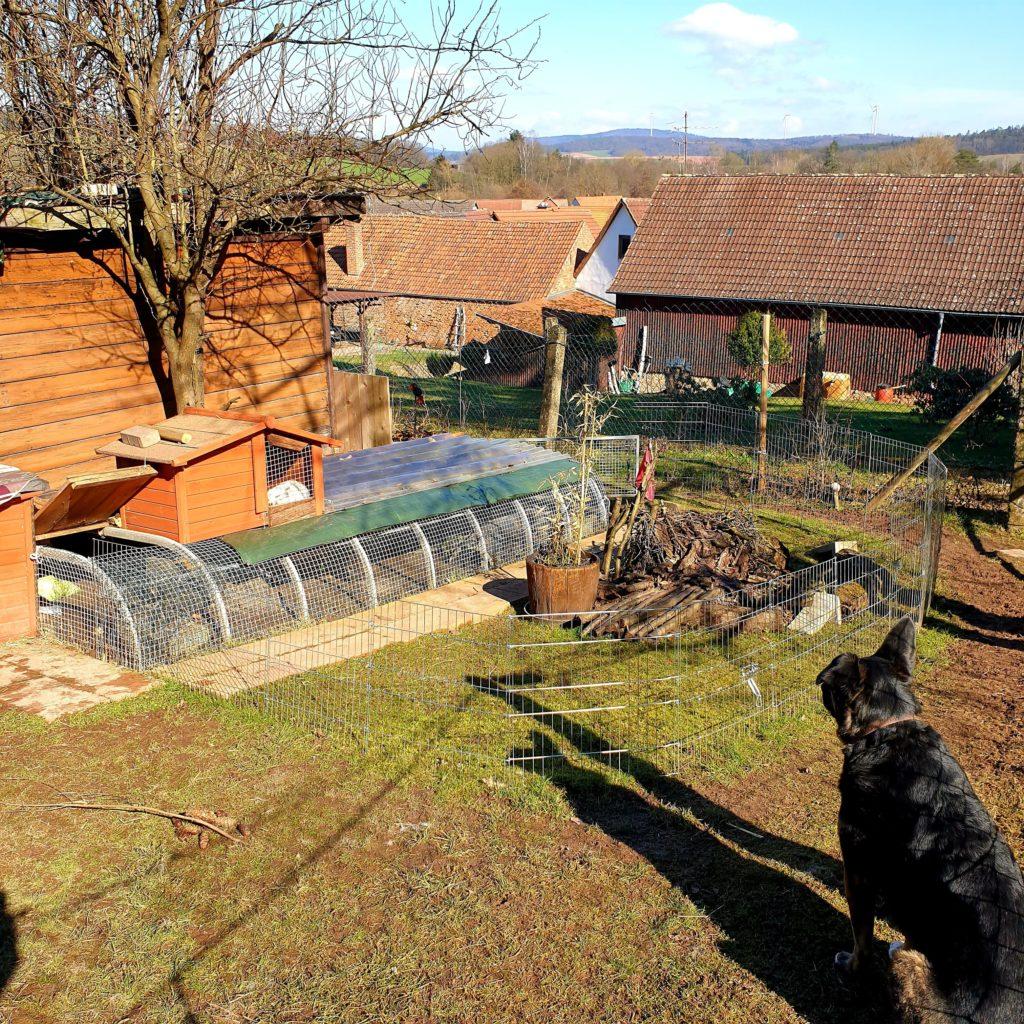 Hund genießt die Sonne