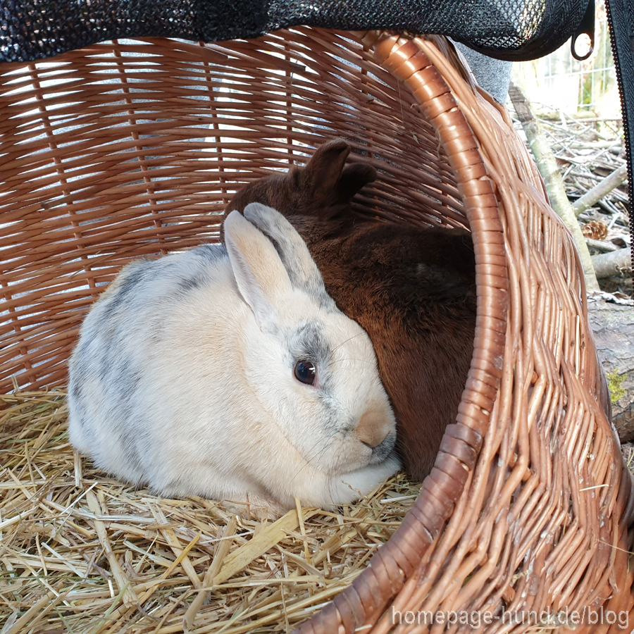 Katzenhöhle Kaninchen