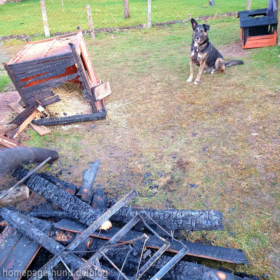 Dorchen Hund vor den Überresten