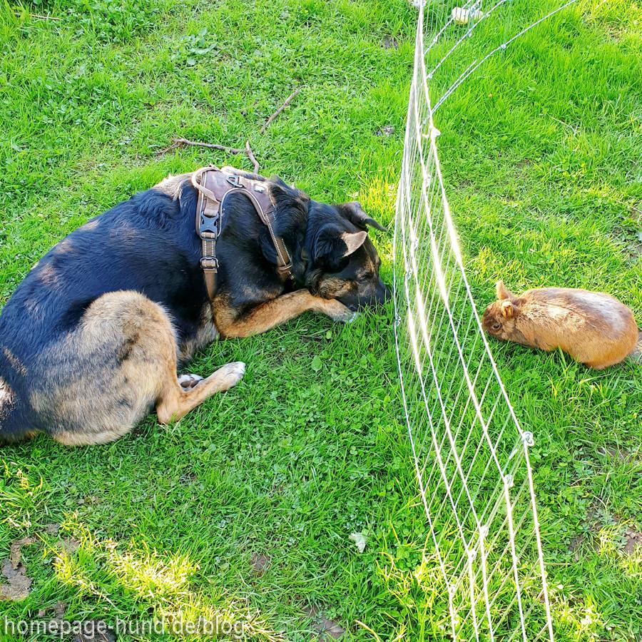 Hund Dorchen und Kaninchen Emilia