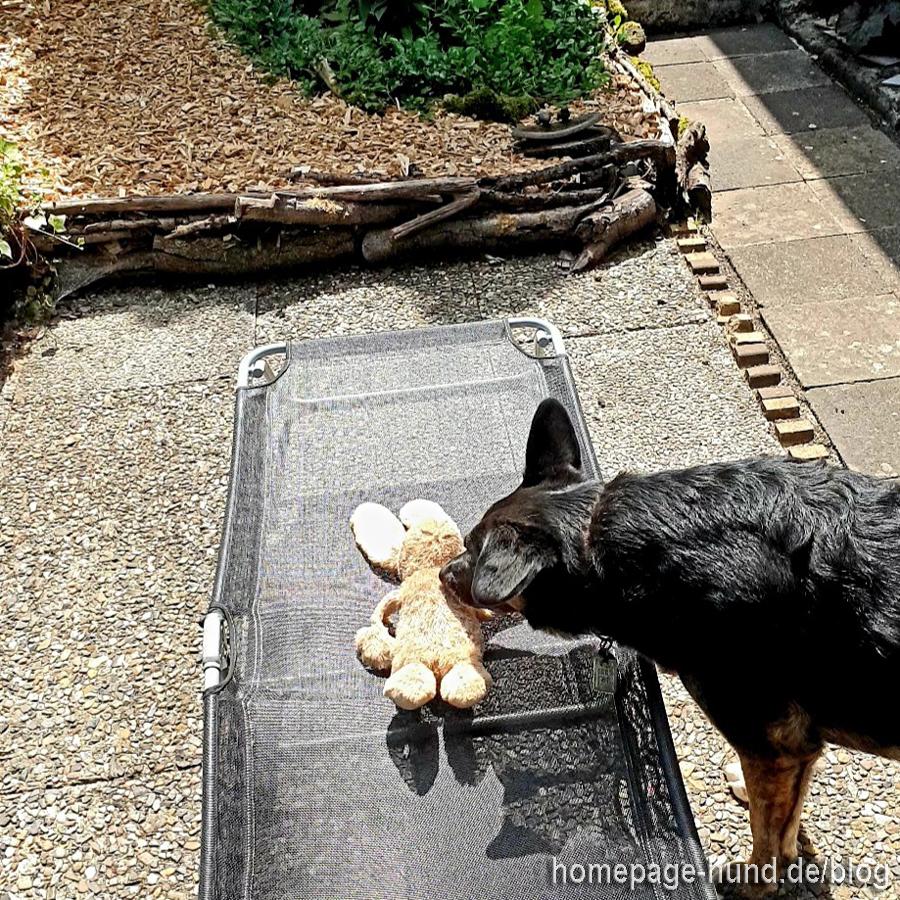 """heute sonnt sich Dorchen`s Kaninchen. Dorchen ist eine """"Badetuch-Deutsche"""", sie reserviert mit ihren Spielsachen - das macht sie zu gern mit Kalli`s Körbchen und er geht dann auch nicht rein, weil es sonst Haue von Dorchen gibt :D"""