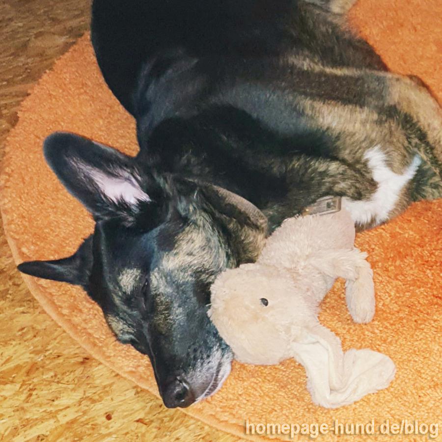 Danach war ich sooo müde und habe mit meinem Kaninchen gekuschelt.
