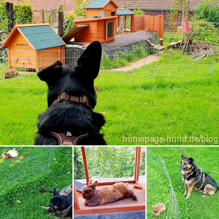 Bürohund bin ich hauptberuflich. Mein Nebenjob ist es, die Kaninchen Emilia & Elli zu bewachen.