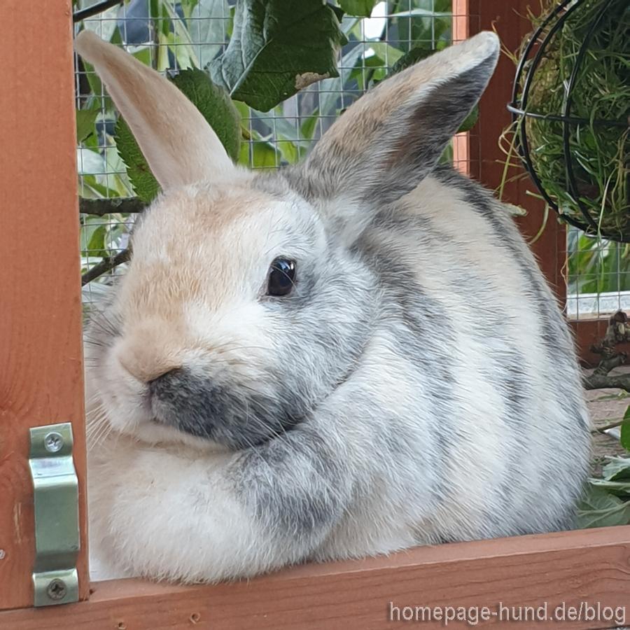 Kaninchen Elli